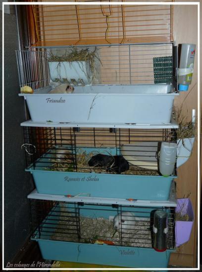 Mes cages dans la remise( octobre 2013)