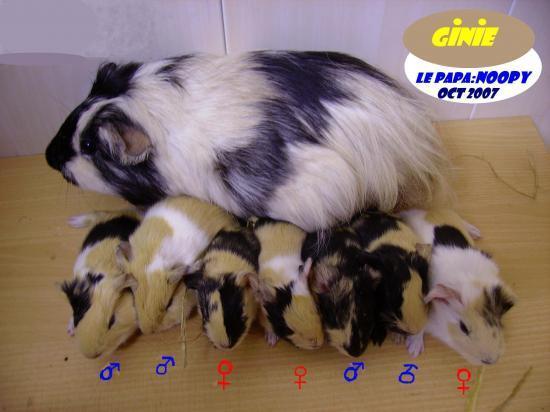 Exploit: 7 bébés vivants.