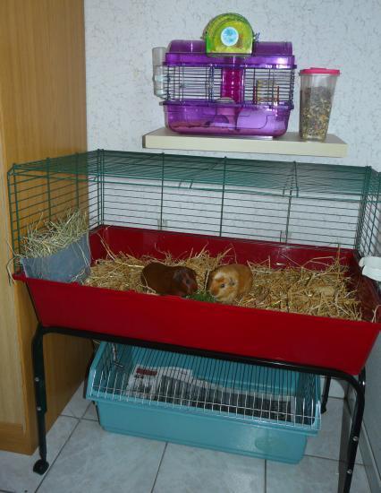 Cages dans mon bureau ( 2011)