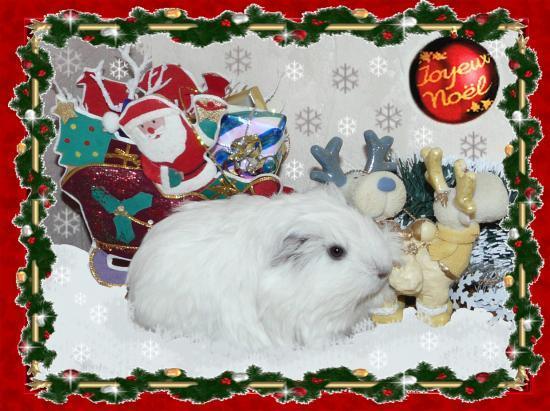 Noël avec Coton (fils de Zinnia)