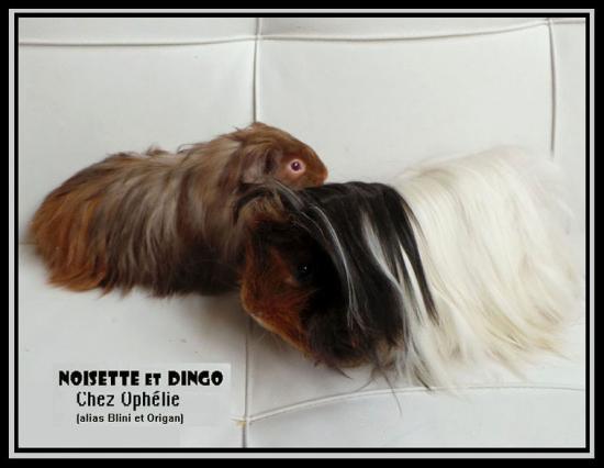 Noisette et Dingo