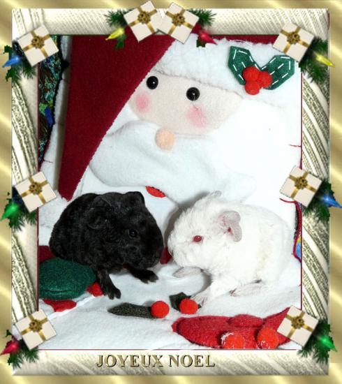 """""""Joyeux Noël"""" avec Saké et Sakura"""