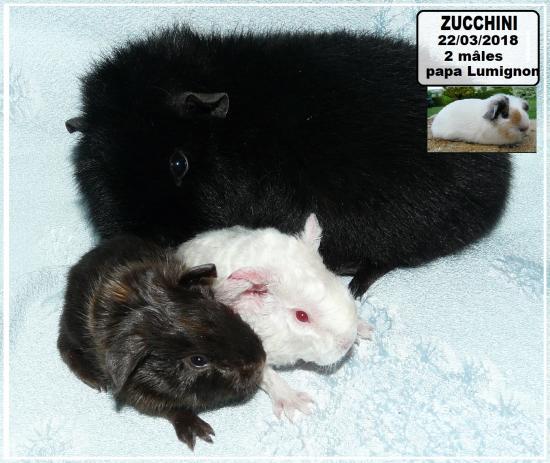 Naissance 2 bébés de Zucchini et Lumignon mi mars 2018