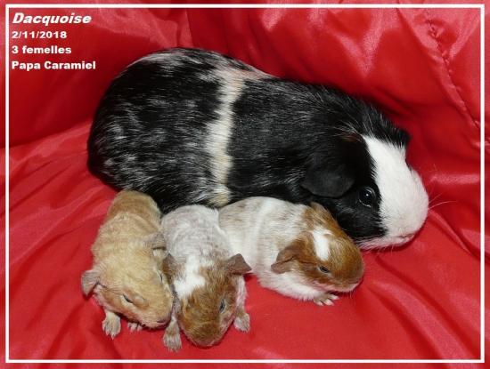 Naissance 3  petits de Dacquoise et Caramiel 2 novembre 2018