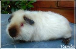 Panda 4 mois