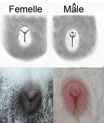 Sexagexy copie