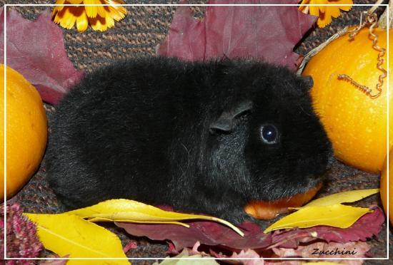 Zucchiniautomne17